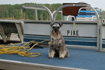 Dazzler Captains the Pontoon at Teal Lake