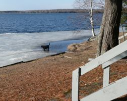 Ice is going, dogs are fishing
